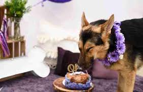 dog only expected to live 6 months celebrates one year birthday