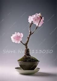 online get cheap planting bonsai tree aliexpress com alibaba group