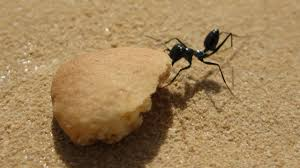 ants know how to back it up