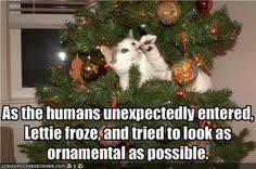Cat Christmas Tree Meme - christmas decorations and cats tbgclan com true born gaming