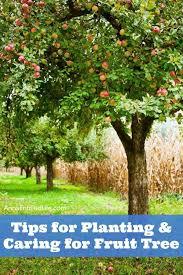 best 25 planting apple trees ideas on apple tree