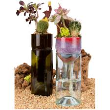 cyma orchids deco wine bottle
