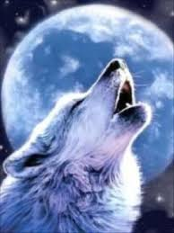 image wolf howling at moon jpg jam clans wiki fandom