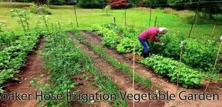 drip irrigation or soaker hose for vegetable garden