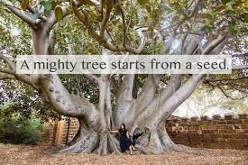 tree ottawa on mondaymotivation a mighty trees starts