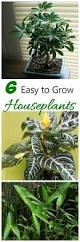 easy plants easy houseplants to grow 6 favorites the gardening cook