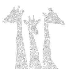 27 millie marotta images animal kingdom