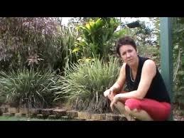 how to trim ornamental grasses