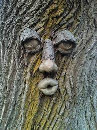 29 best tree faces images on tree faces gardens and diy