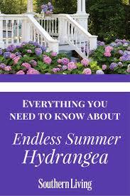 enjoy an u0027endless summer u0027 hydrangea public and plants