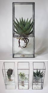 best 20 botanical decor ideas on pinterest plants indoor