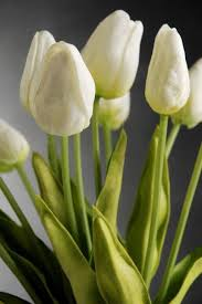 white tulips touch mini white tulip bouquet 14in