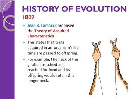 evolution topic 4 evolution things to cover history of the theory