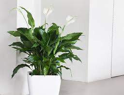 10 best indoor plants for men gear patrol