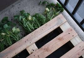 How To Make A Table Out Of Pallets Brightnest Learn To Make A Pallet Garden In 7 Easy Steps