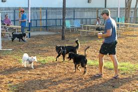 dog loving yard bar opens for canines and humans eater austin
