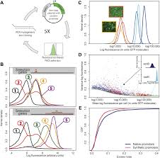 Home Evolutionary Healthcare Expression Noise Facilitates The Evolution Of Gene Regulation Elife