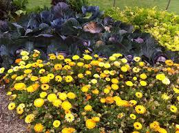 wollongong botanic gardens wollongong botanical gardens nsw