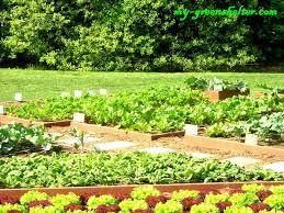 simple vegetable garden
