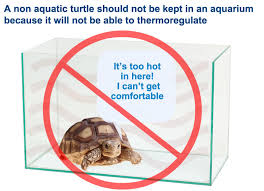 indoor turtle tables how to take care of a turtle
