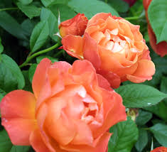 in the garden enchanting orange flowers d magazine