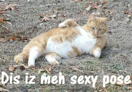 sexy pose cat meme by imlittlekasey on deviantart