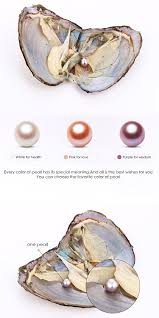 amazon com hengsheng 5 pcs small akoya pearl oysters with 7 8 mm