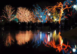 Zoo Lights by Reflecting U0027 On Real Estate And The Lights Of The Season Real