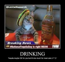 Funny Tequila Memes - funny cat archives lol cat research