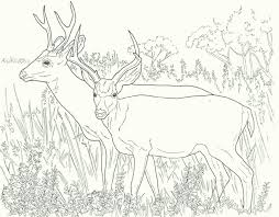 deer coloring pages coloring pages
