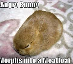Loaf Meme - angry bunny turns him self into a bread loaf meme your friends