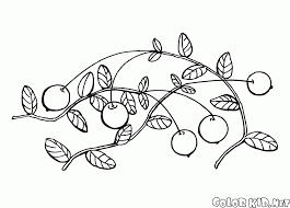 coloring page raspberries