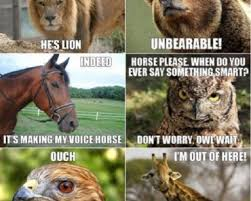 Animal Pun Memes - animals funny pics memes captioned pictures funnywebsite com