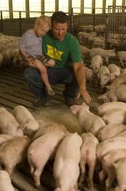 thanksgiving point farm country 144 best farm life hogs images on pinterest farm life farm