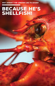126 best fun with lobster images on pinterest lobsters maine