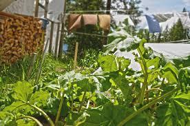 still life with backyard nadine sander green full press journal