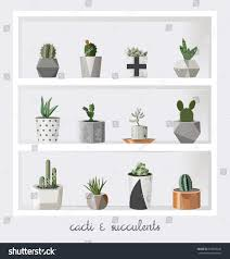 succulent plants growing cute pot scandinavian stock vector