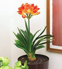 nobby house plants with flowers pinterest home designs
