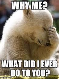 Why Me Meme - facepalm bear latest memes imgflip