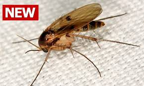 What Are The Small Flies In My Bathroom How To Get Rid Of Gnats How To Kill Gnats How Do You Get Rid Of