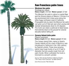 ca native plant society palms pop up all over s f since the 1989 earthquake the city