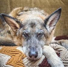 dog euthanasia in home euthanasia veterinarians in huntington