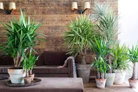 pflanzen für schlafzimmer pflanzen für schlafzimmer 55 images pflanzen im schlafzimmer