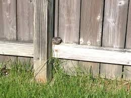 there is a little bird that can u0027t fly in my backyard what should