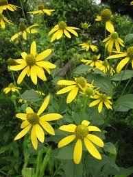 native plant database native plant descriptions