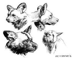 lion sketches u2014 weasyl