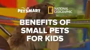 Petsmart Small Animal Cages The Benefits Of Petsmart U0027s Small Pets For Kids Youtube
