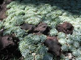 introduction to echeverias my personal experiences in southern