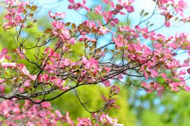 free images landscape tree branch flower petal spring
