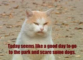 Hump Day Memes - lolcats hump day lol at funny cat memes funny cat pictures